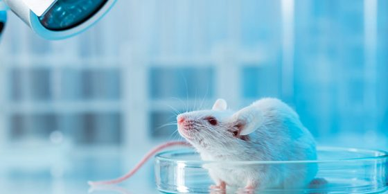 آزمایش بر روی حیوانات نه اخلاقی است نه قابلاعتماد