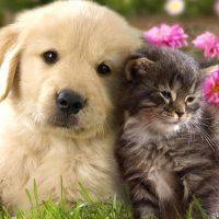 اخلاقمداری حیوانات از زبان مارک رولندز