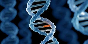 ترکیب سلولهای انسان و میمون: اخلاقی یا غیراخلاقی؟