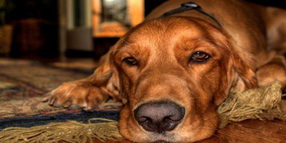 چرا نگهداری از حیواناتِ خانگی اساساً غیراخلاقی است؟